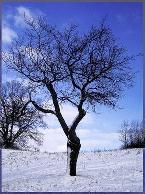**Winterzauber**