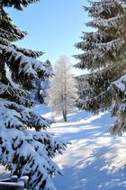 Winterzauber im Schweizer Jura Teil 11