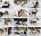 Winterzauber im Wildpark