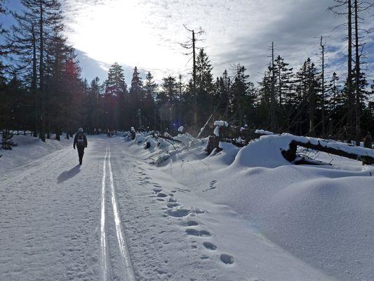 Winterzauber rund um den Brocken (2)