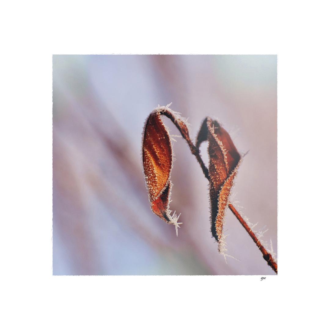 - winterzauber VI -