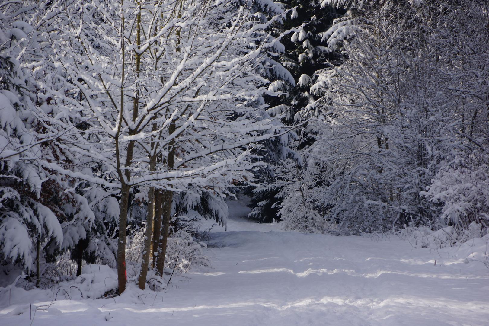 Winterzauber_01