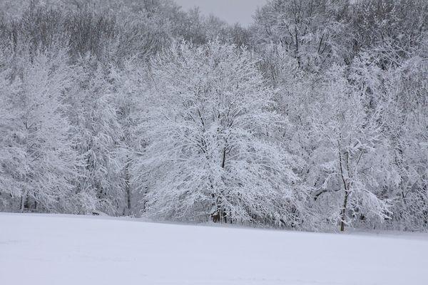 Winterzauberwald