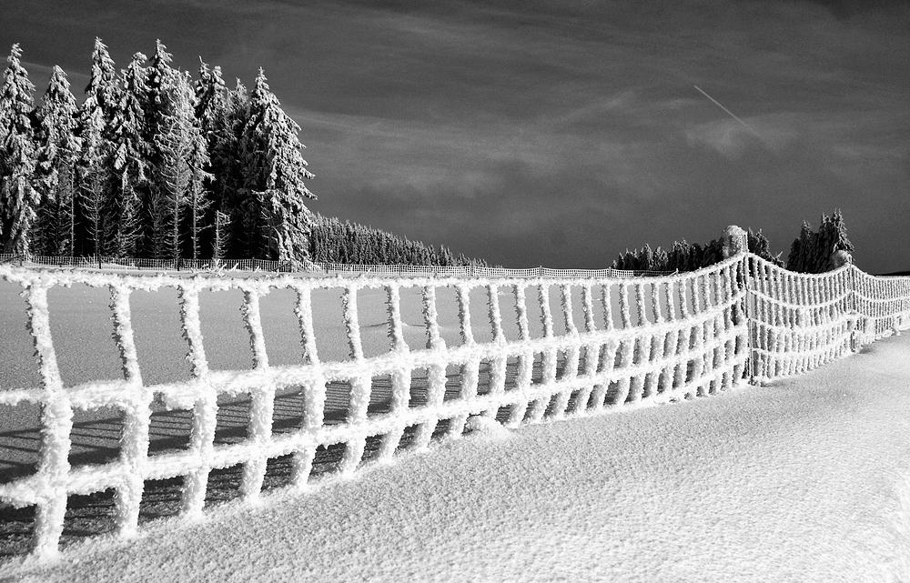 """""""Winterzaun"""" ...."""
