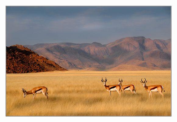 Winterzeit in Namibias Süden