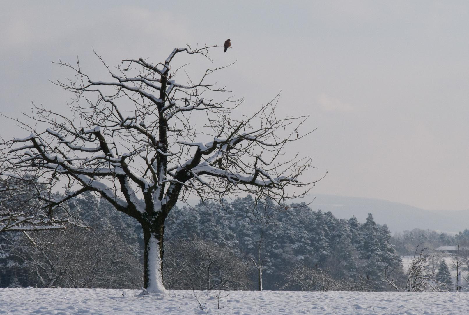 Winterzeit - Ruhezeit
