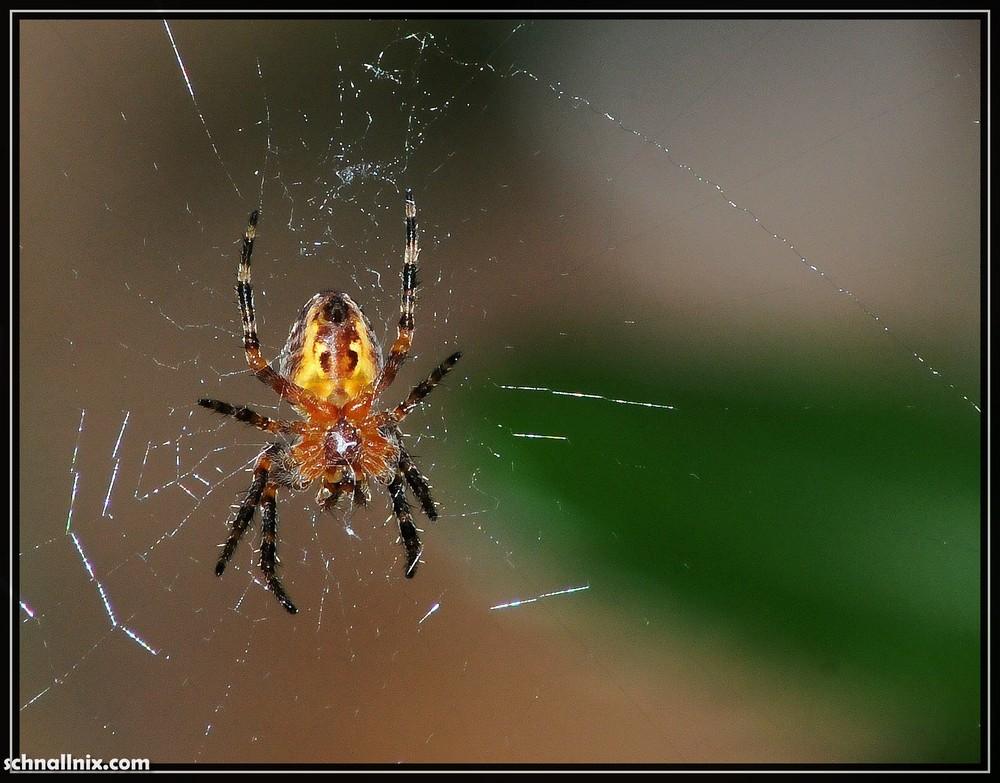 ...winzig kleine Spinne etwas größer