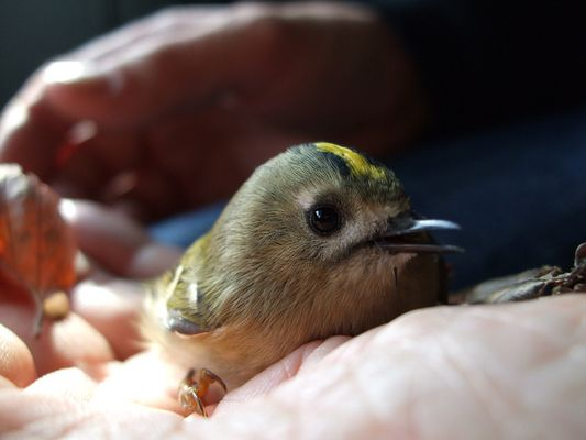 winziger Vogel