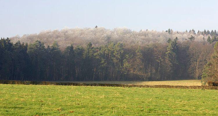 Wipfelfrost
