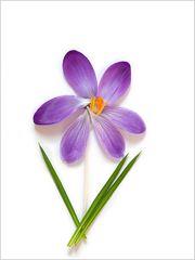 ..wir basteln uns ein Frühlingsblümchen..