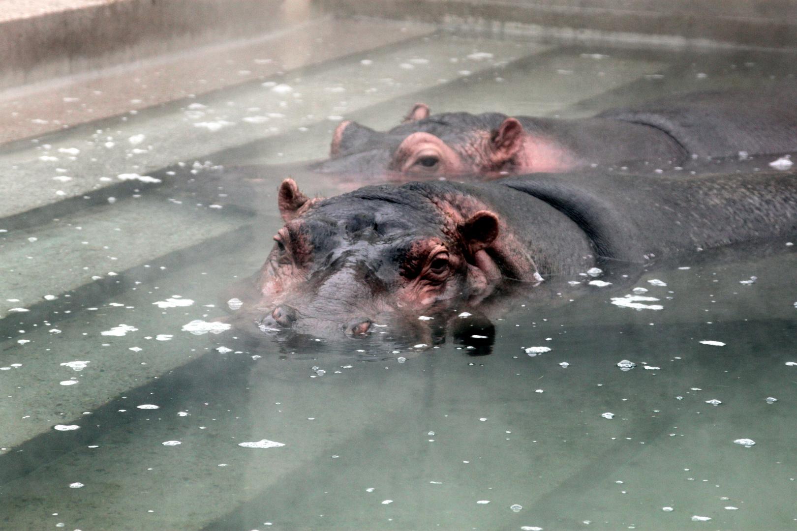 Wir bleiben lieber unter Wasser, ist wärmer