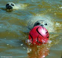 """Wir brauchen auch vor """"Robben """" keine Angst haben :-)))"""