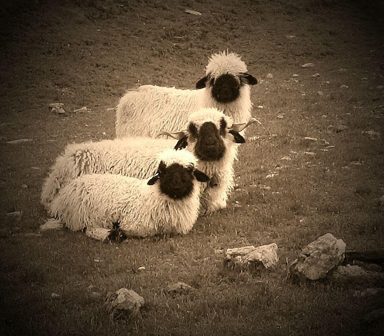 Wir drei gehören zusammen, ....