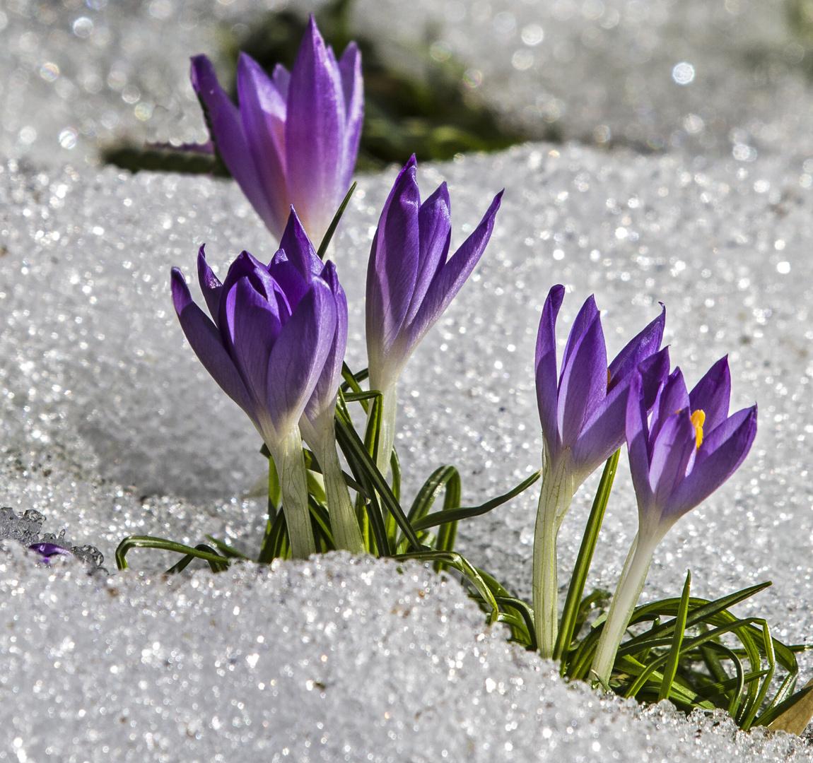 Wir entscheiden, wann der Winter zu Ende ist...