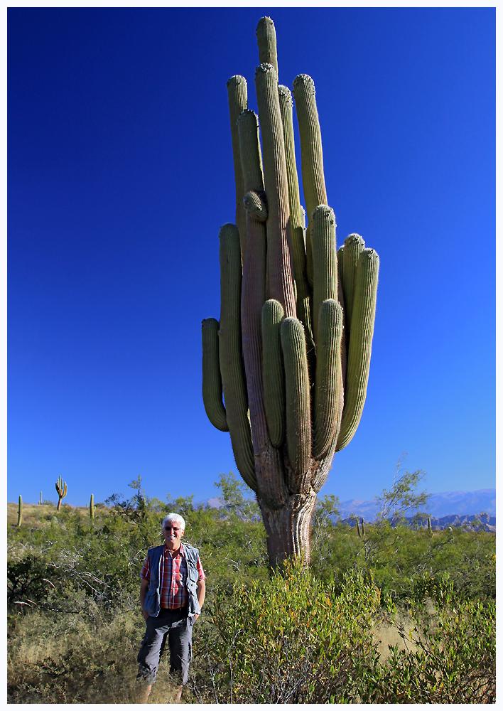 Wir haben den größten Kaktus der Welt entdeckt...