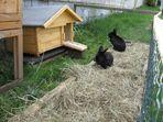 Wir machen es anders....wir beschenken unsere Hasen zu Ostern.... ;)