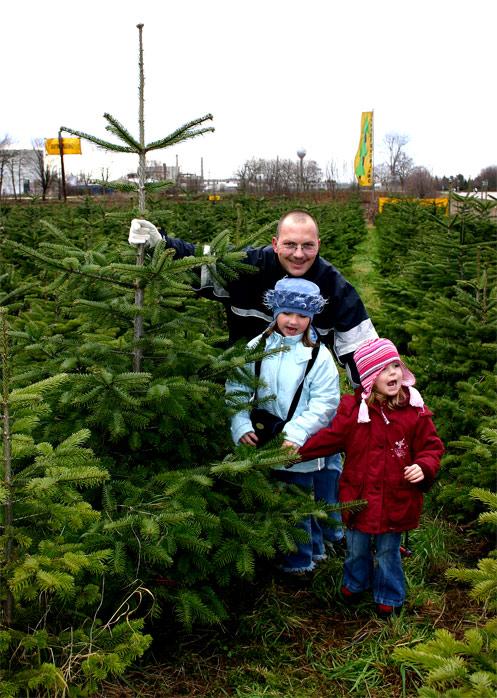 Wir pflücken einen Weihnachtsbaum Teil 1