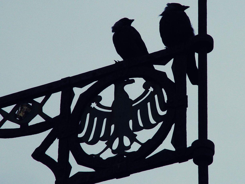 wir sch... auf den Adler...