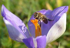Wir werden das schon stemmen...meinte die Biene!