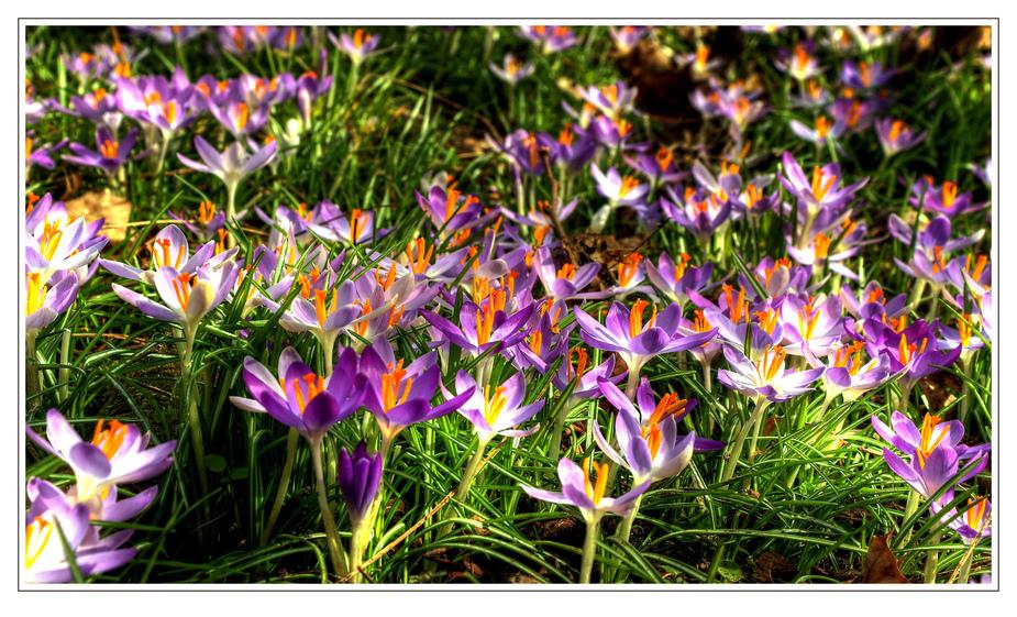 Wir wollen unsern Frühling wieder haben.