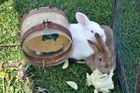 .. wir wünschen Euch OSTERHASEN alles Gute und schöne Osterfeiertage.