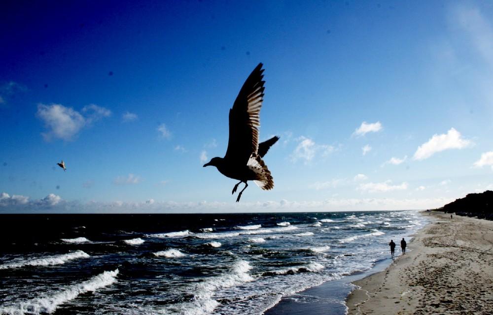 Wird die Freiheit der Vögel überbewertet?