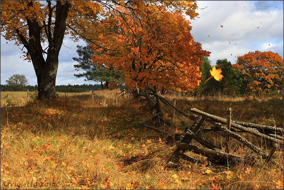 Wirf deine Gedanken wie Herbstblätter ....