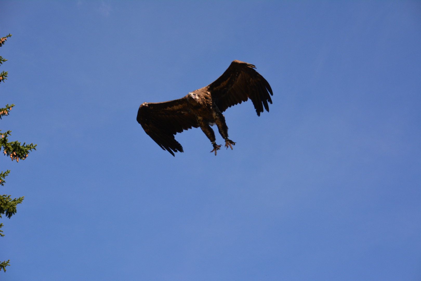 Wirklich keine Taube :-)