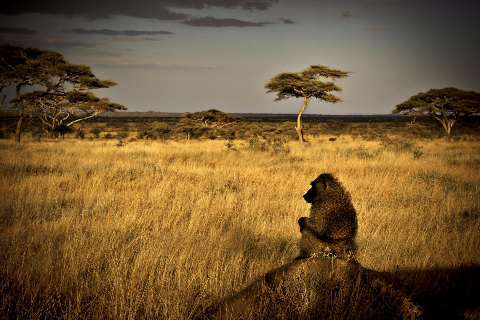 Wishful baboon