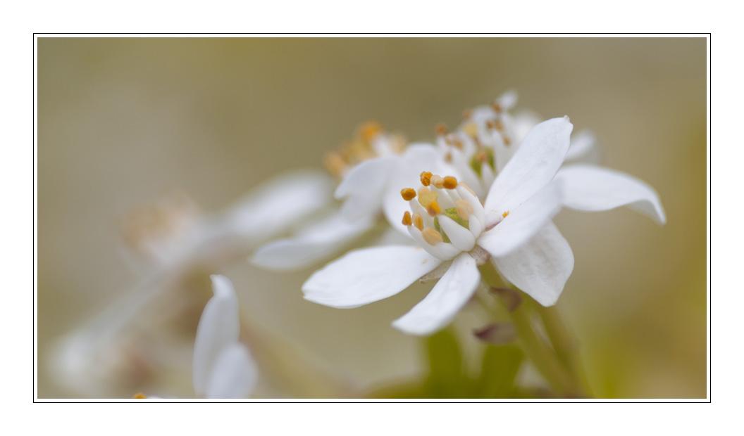 Wit bloempje 2