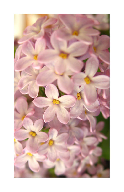 ... with a lilac scent