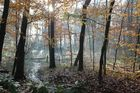 Wittringer Wald