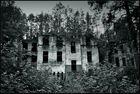 Wo auf Ruinen Wälder wachsen