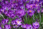Wo bleibt denn der Frühling.....?