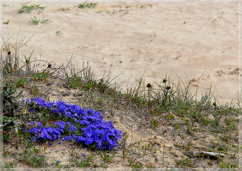 Wo Blumen blühen, lächelt die Welt