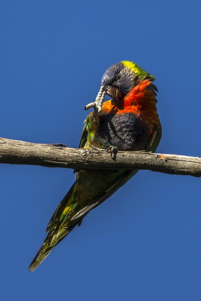 Wo der Papagei den Vogel hat ...