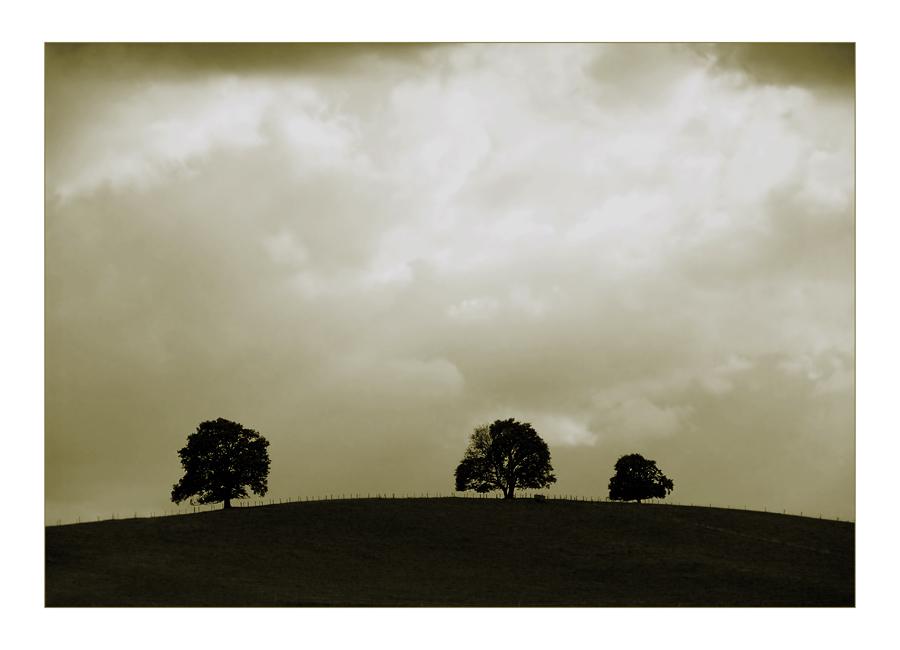 Wo die Bäume Dich kennen ...