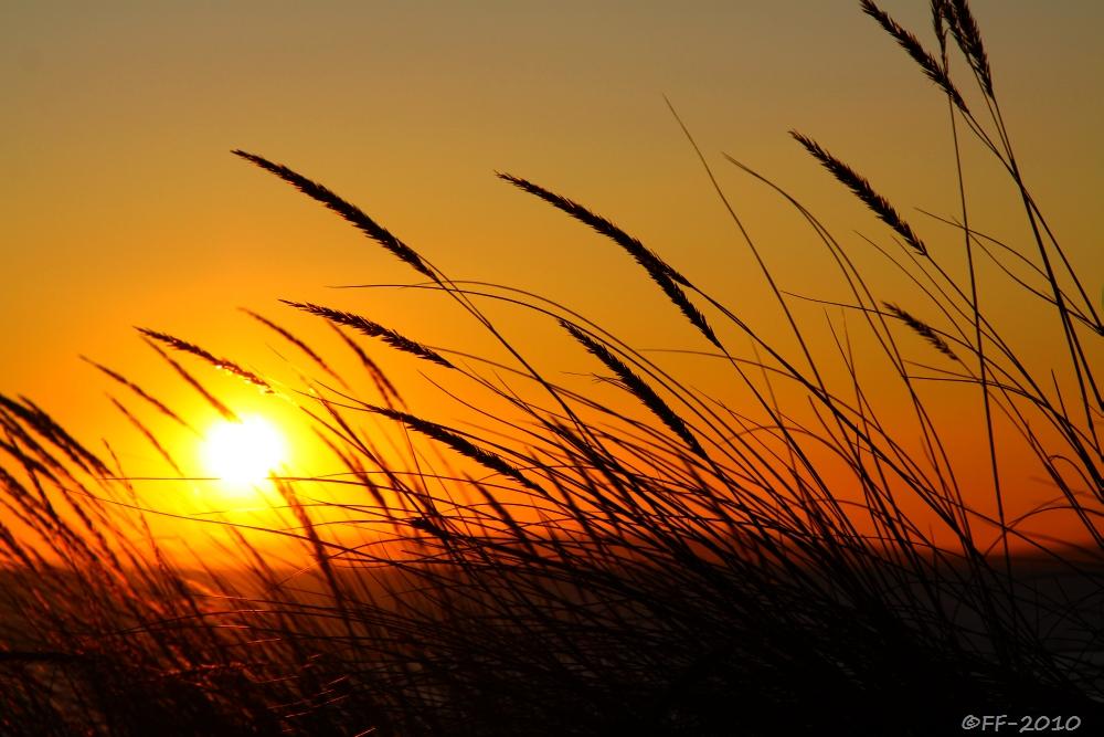 Wo die Sonne das Gras entflammt...