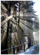 < Wo die Sonne den Nebel durchbricht >