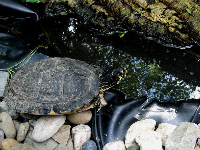 Wo ist blos die Sonne ....die brauchen wir Schildkröten doch so dringend....