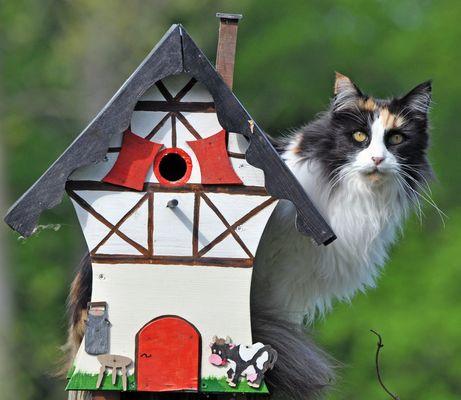 Wo ist das Vögelchen!!!