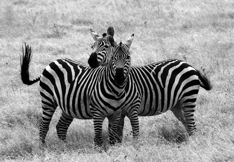 Wo ist denn nun der Zebrastreifen?