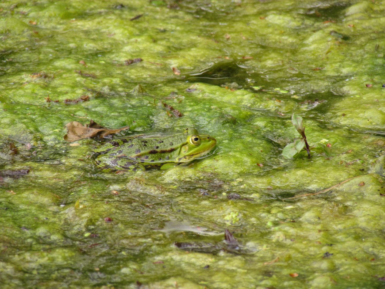 Wo ist der Frosch