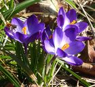 Wo ist der Frühling hin