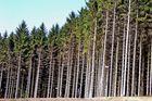 Wo ist der Wald....??