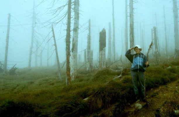 Wo ist der Wald, wo ist er geblieben ?