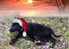 Wo ist der Weihnachtsmann ....