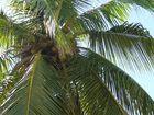 wo ist die Kokosnuss? :O)