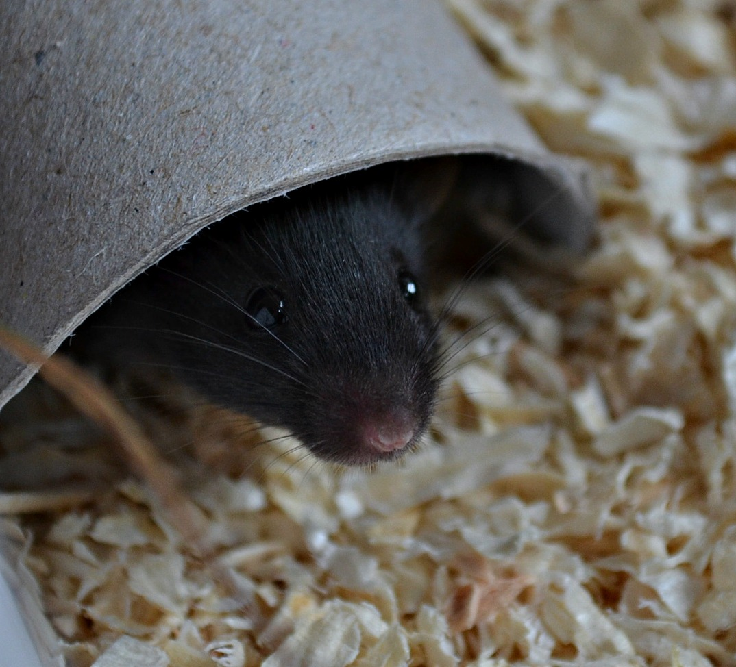 Wo ist die Maus