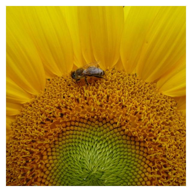 Wo ist hier der Honig?